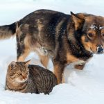 10 Tips to Keep Your Pet Safe & Warm in Cold Weather