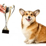 Tips for Your First Dog Show or Competition