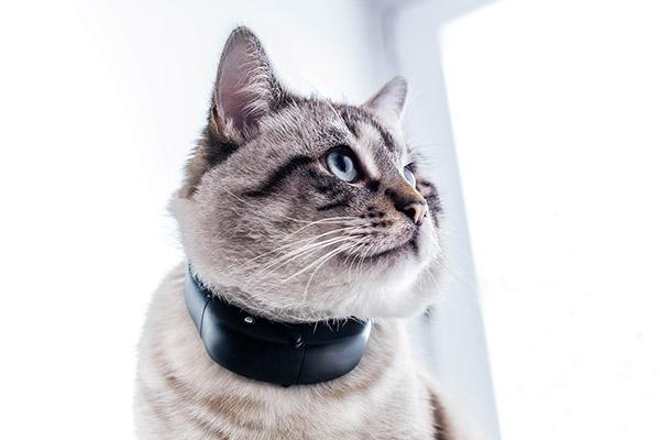 Tractive GPS Cat Tracker