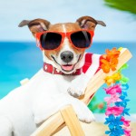 Travelling at Home and Abroad with Your Pet