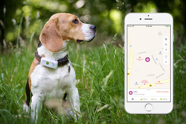 Weenect GPS Cat and Dog Tracker