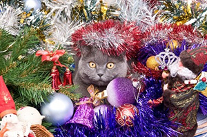 Cat in Christmas Tree Decorations