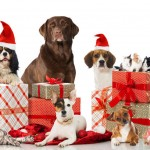 Christmas Gifts for Your Pet 2017