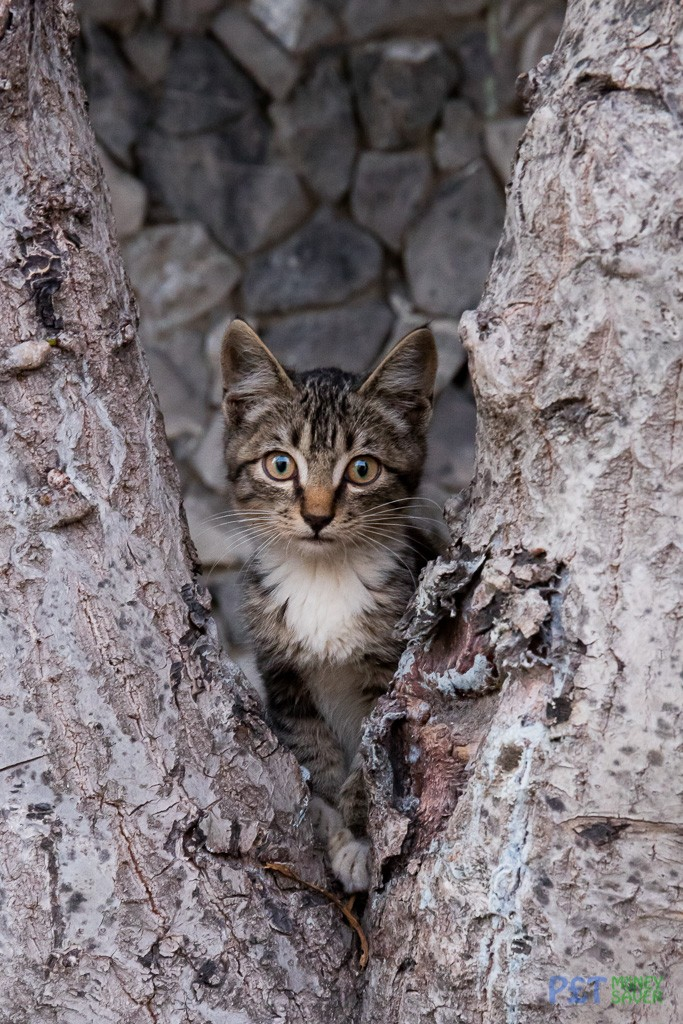 Cute tabby kitten hiding in tree