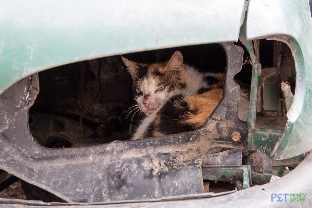 Sleepy cat resting inside abandoned car