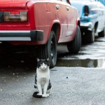 Cool Cats of Cuba – Cuban Cat Photos