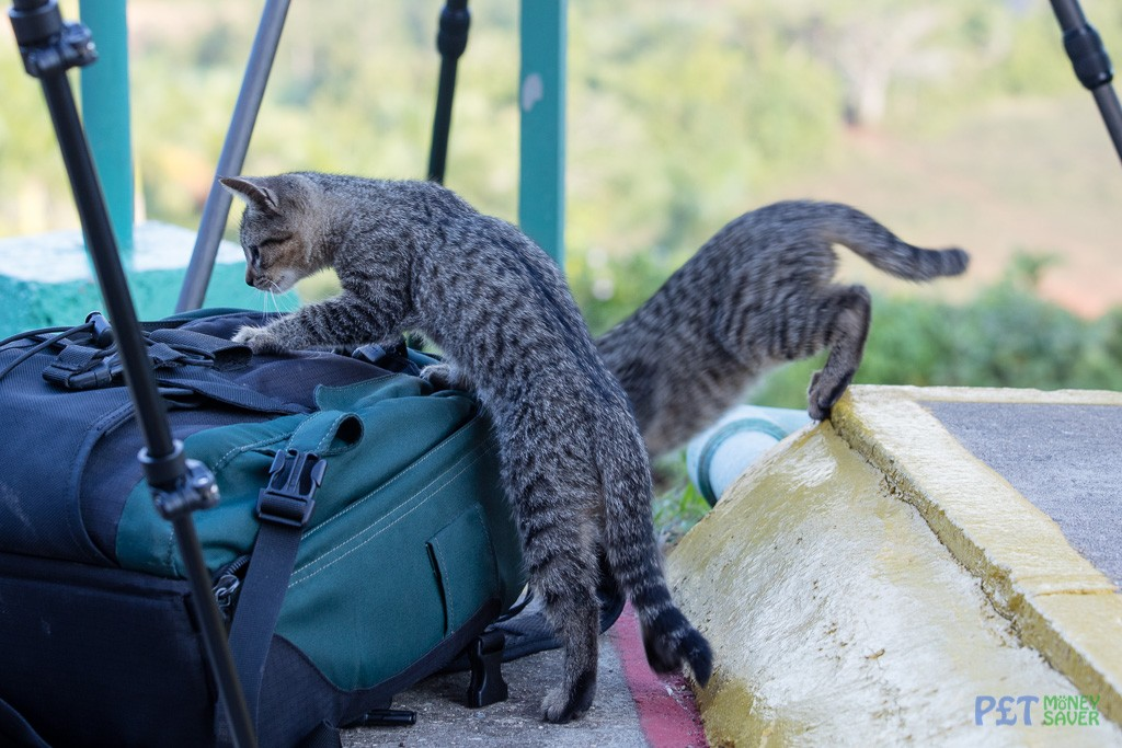 Two curious kittens exploring a camera bag