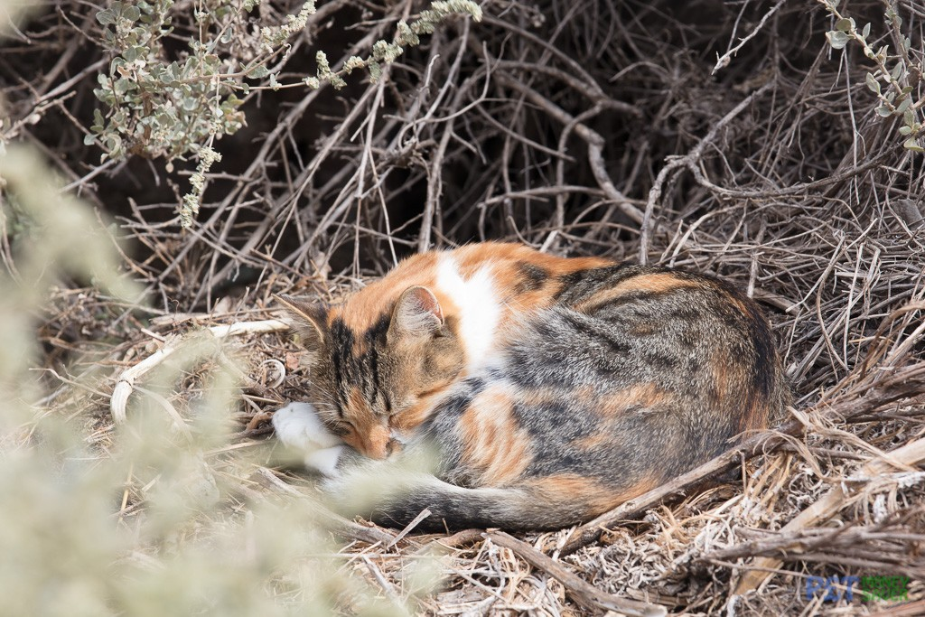 Black and orange cat sleeps in the undergrowth