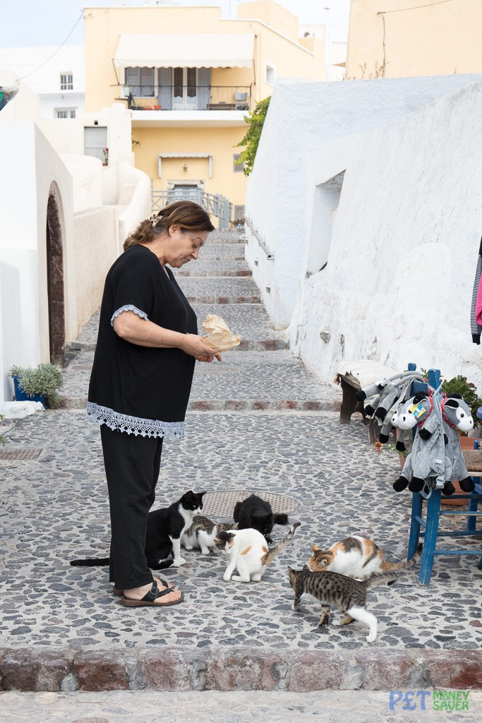 Shop keeper feeds a group of cats in Santorini