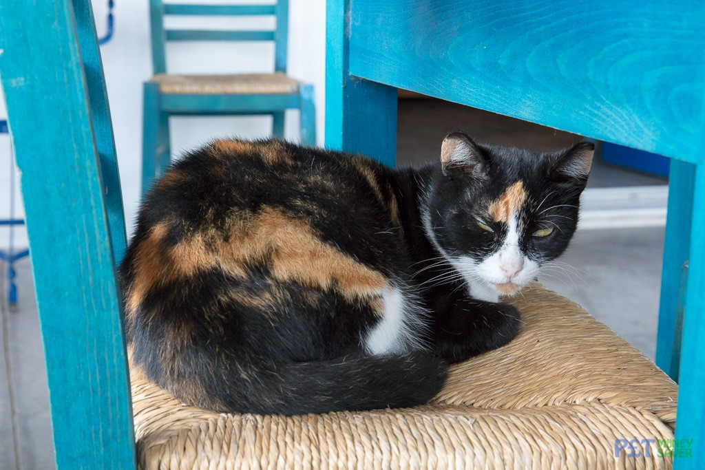 Tortoiseshell cat sits on chair in a cafe