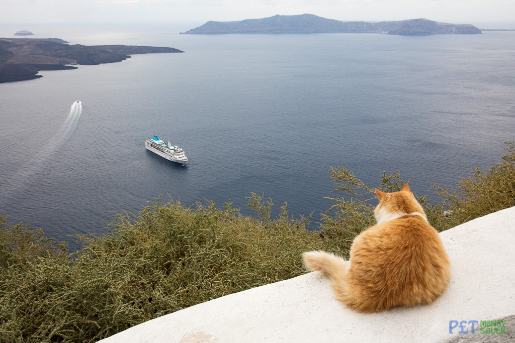 Admiring the view from Santorini