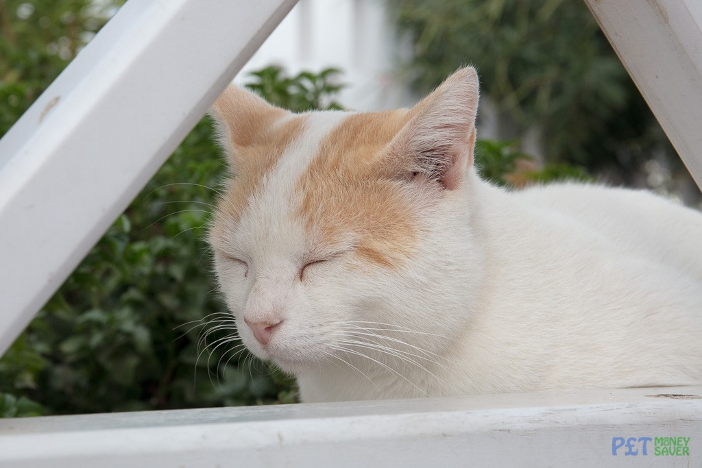 Snoozing in Santorini