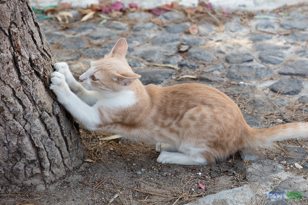 A tree makes a perfect scratching post