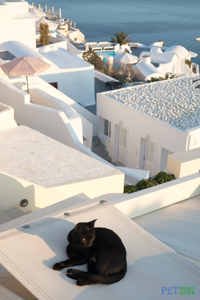 A black cat prepares for a nap as the sun sets over Oia