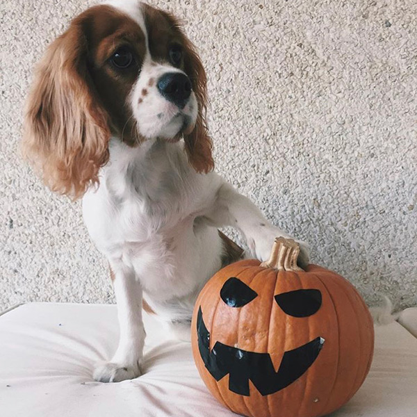 Dog Autumn Bucket List
