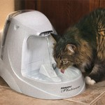 15 of the Best Pet Water Fountains