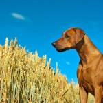Grain-Free Pet Food – Good or Bad?
