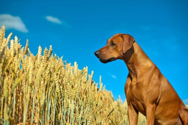 Grain Free Pet Food