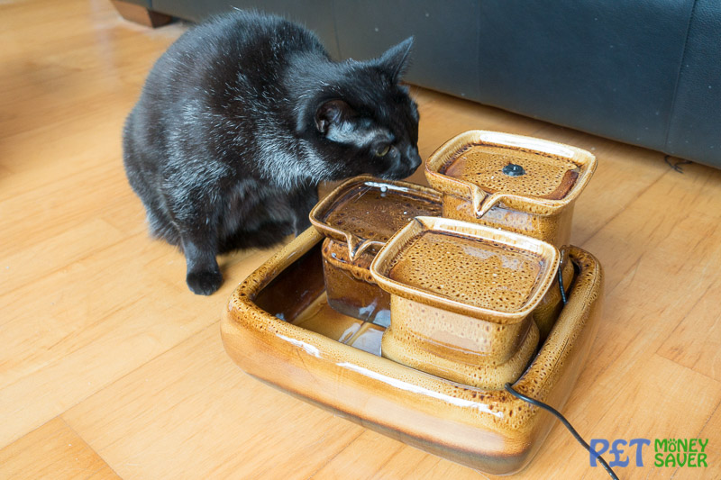 Miaustore Cat Water Fountain Review Assembled