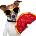How to Keep Your Pet Cool on Hot Days