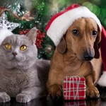 Christmas and Pets – Keeping them Safe
