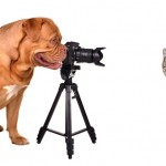 10 Tips for Taking Great Photos of Your Pet