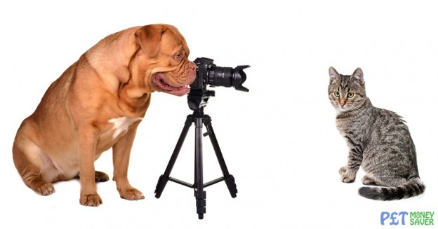 Take Better Pet Photos