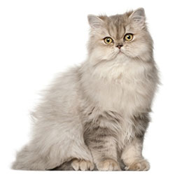 Compare prices for Persian Cat food